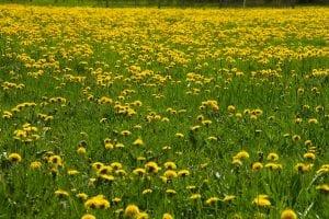 bloemen boerderijcamping